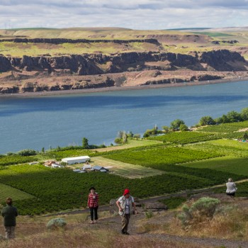 Ameritage - Wine Cruise on the Columbia River