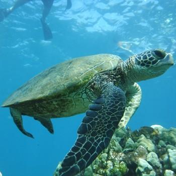 Hawaiian Seascapes