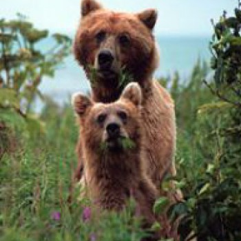 Alaska - Alaska Bear Viewing