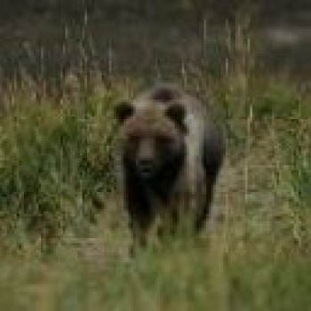 Alaska - The National Park Safari