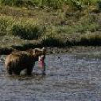 Alaska - Fishing and Bears combo