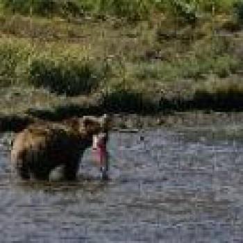 Alaska - Fishing and Bears combo