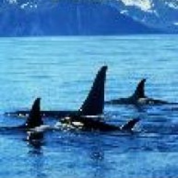 Alaska - National Park 7 Day Trip