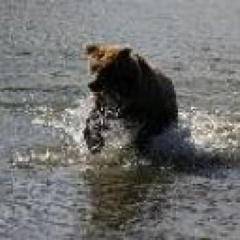 Alaska - The Ultimate Adventure